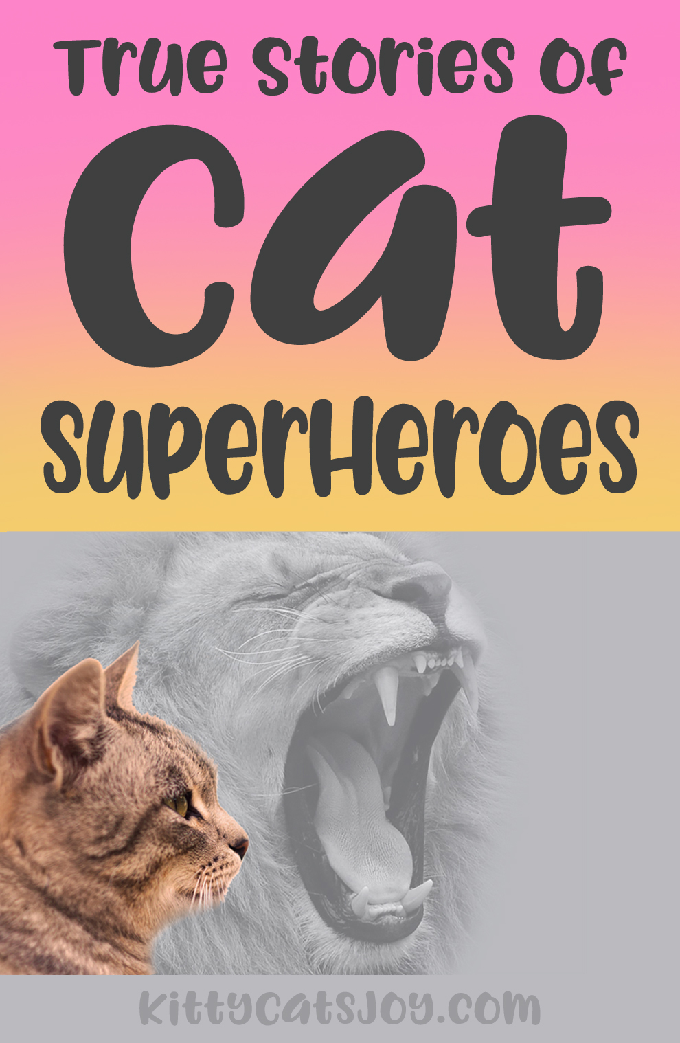 5 True Stories of When Cats Were Brave Superheroes