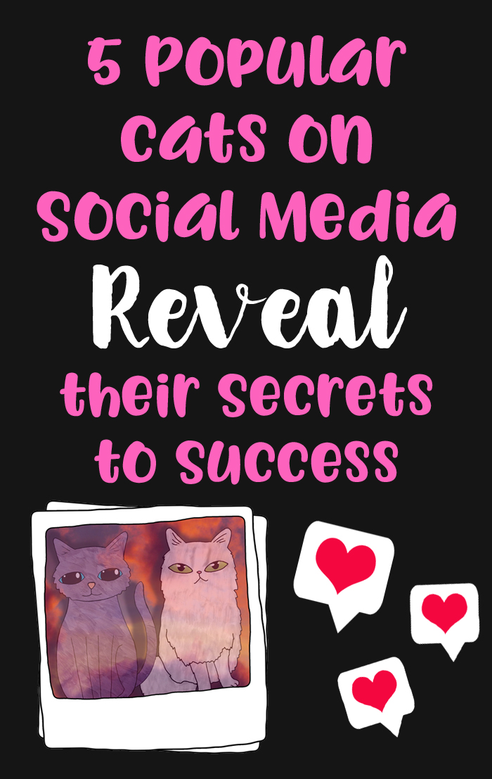 social media success for cats