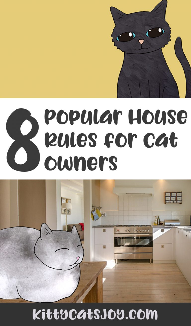 8 House Rules for Cat Owners
