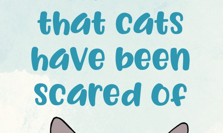 9 Weird Things That Cats Have Been Scared Of