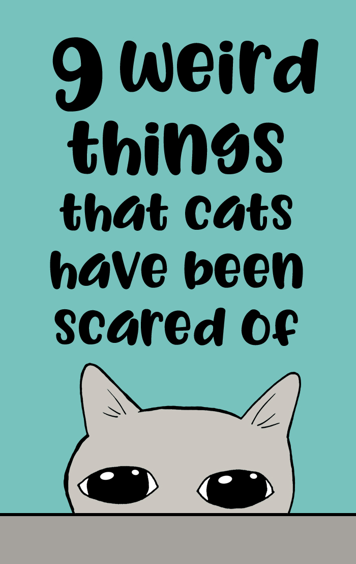 funny scared cat stories