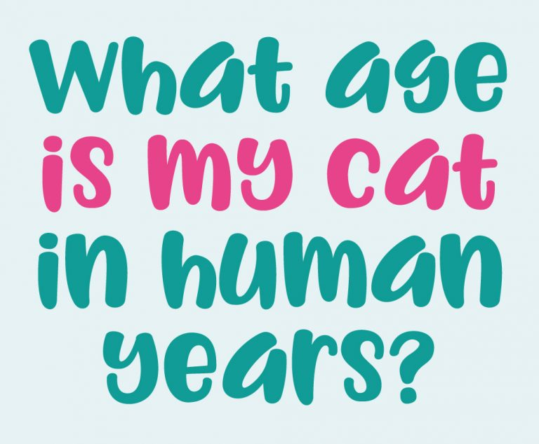 What age is my cat in human years?