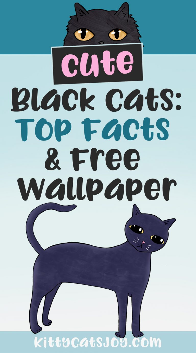 Cute Black Cats: Top Facts & Free Wallpaper