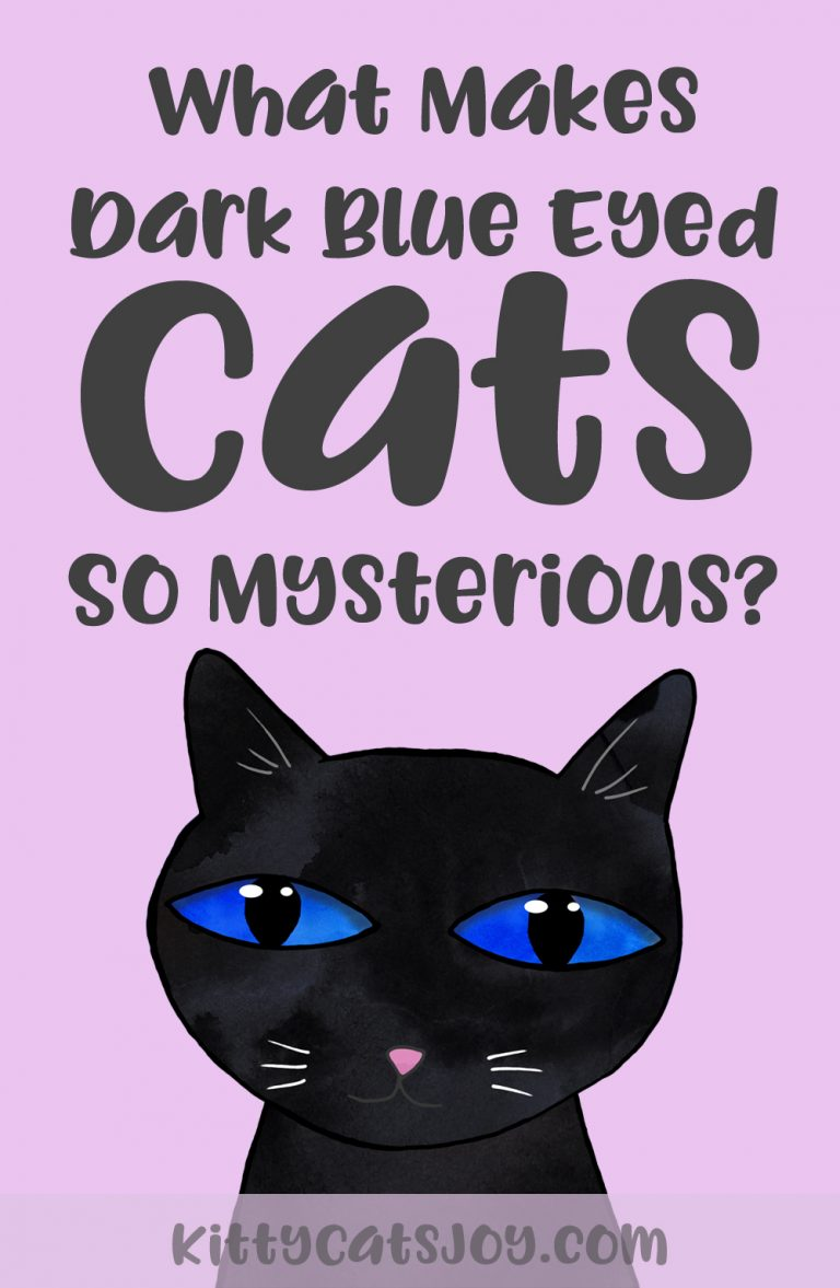 What Makes Cats With Dark Blue Eyes So Mysterious?