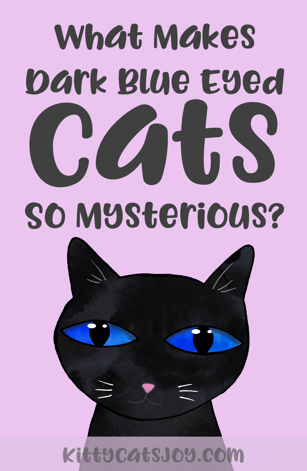 What Makes Dark Blue Eyed Cats So Mysterious Kitty Cats Joy