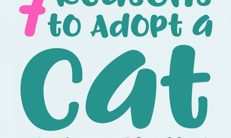 Adopt Cats from Shelters Infographic Post