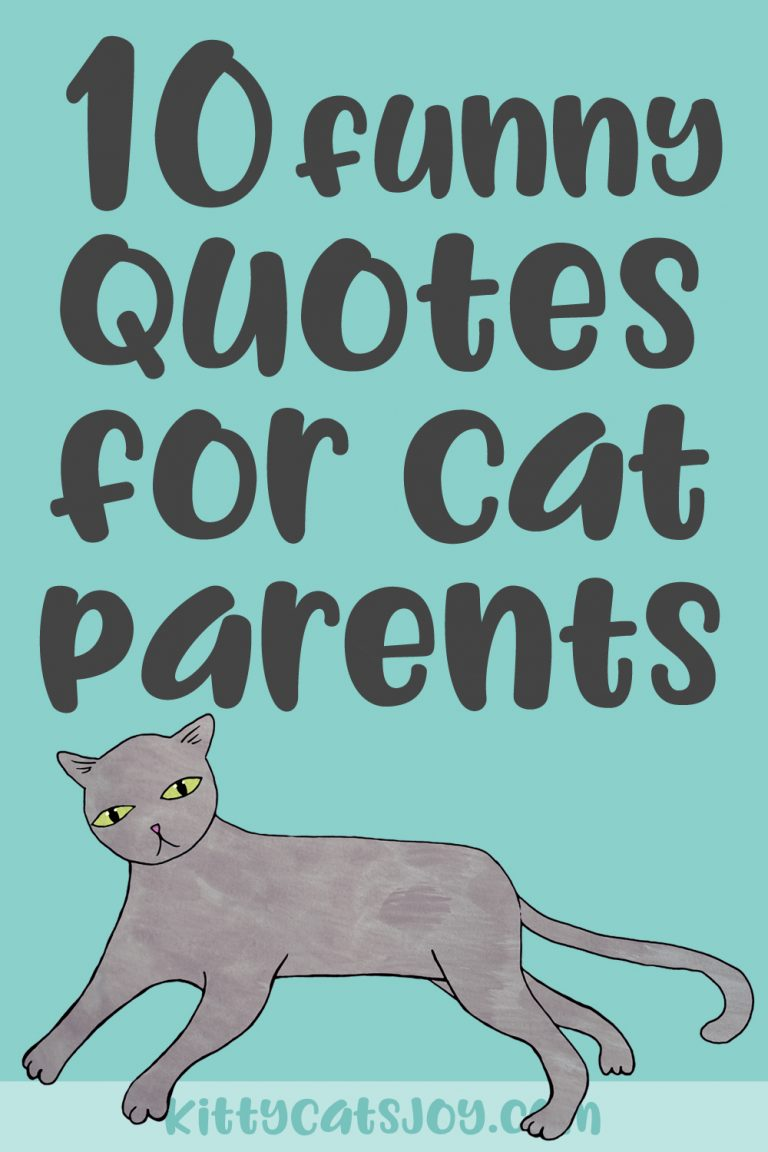10 Funny Cat Quotes For Cat Parents
